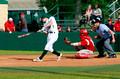 LC-M Battlin' Bear Baseball